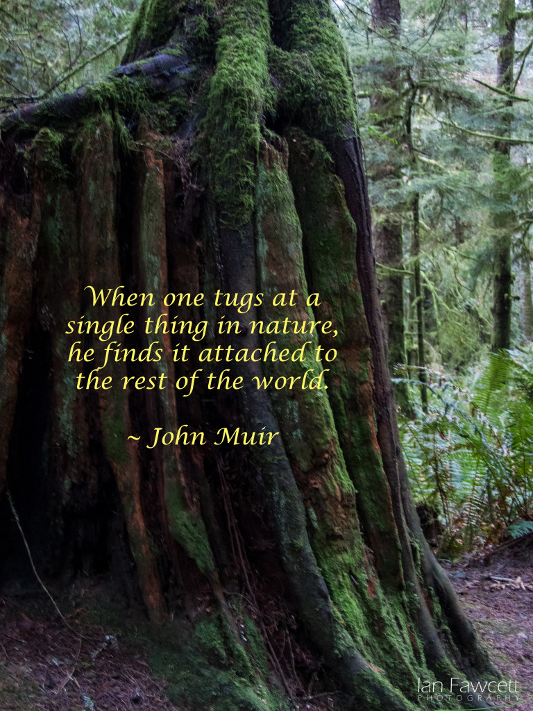 East Sooke Park - Quotation 4